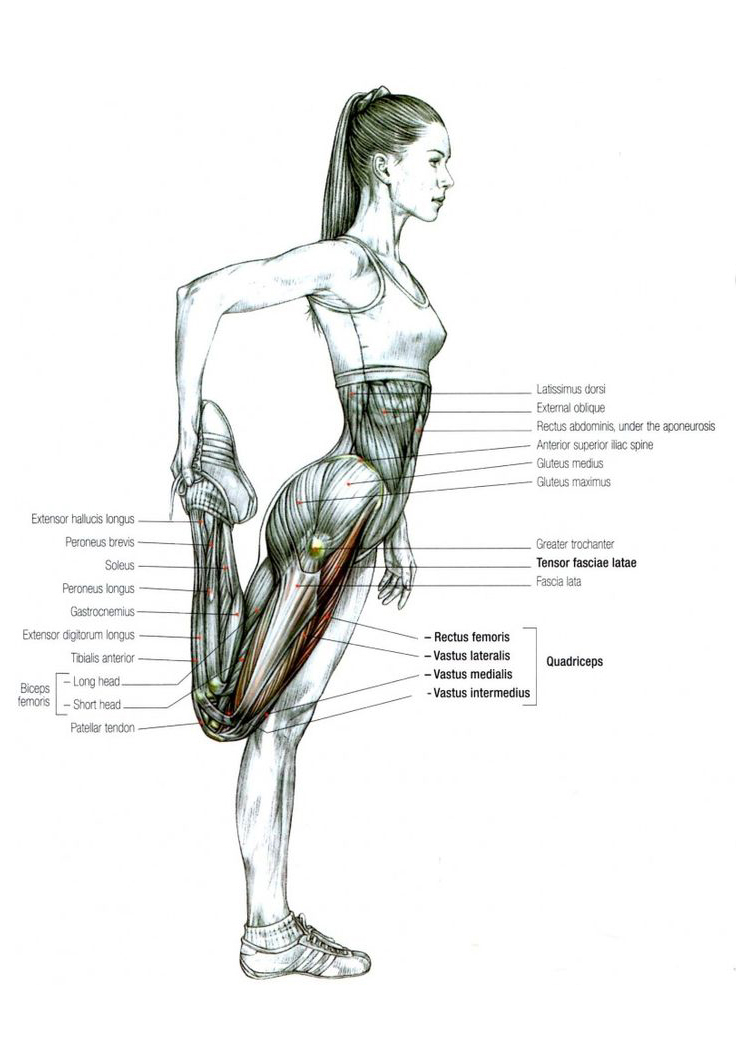 top 6 stretches for boxing